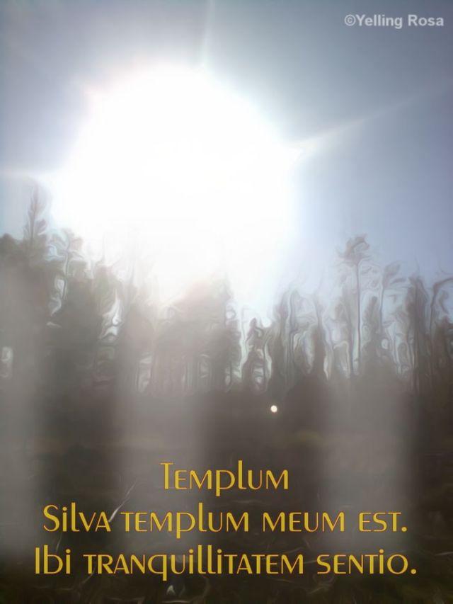 001 Templum 26.12.15 by Yelling Rosa Parvula